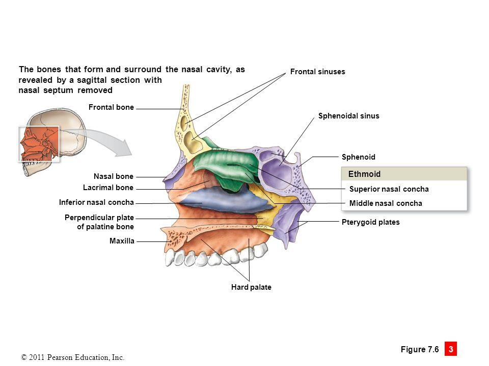Nasal Specific Techniques Denver, CO | Denver Chiropractic, LLC